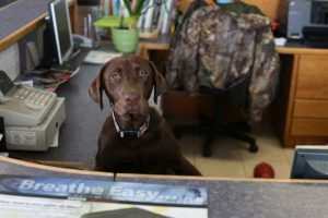 A friendly dog sits behind the reception desk at East Amazon Auto Repair in Eugene, Oregon